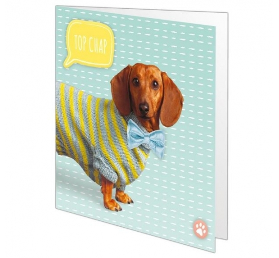 "5 x 5"" Dress Up Card Kit - Paws for Thought"